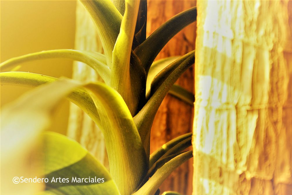 Miedo, ansiedad, angustia o tristeza son algunas de las emociones o sentimientos del estrés postraumático que pueden presentarse a raíz de los terremotos vividos en México, mismos que pueden prevalecer por tiempo indefinido en algunas personas, por lo que es necesaria la atención para superar dicha situación, tales como realizar actividad física, meditación o acudir con un especialista.